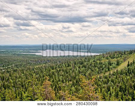 Peaceful Evergreen Trees In The Clean And Green Nature Landscape