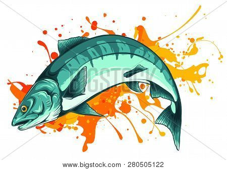 Vector Illustration Salmon Fish With Color Stain