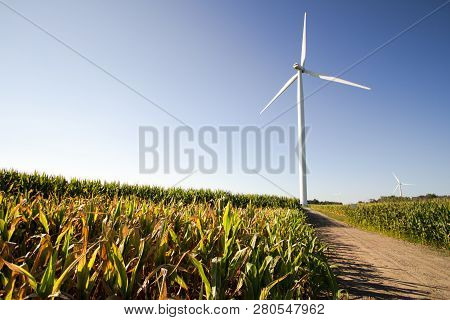 Michigan Wind Farm. Wind Turbine In The Middle Of A Corn Field In The Farm Land Of The American Midw