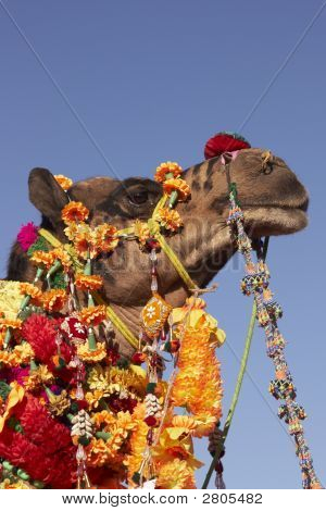 Brightly Decorated Camel