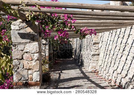 Purple flowers Bougainvillea on a wooden pergola. Santorini. Greece poster