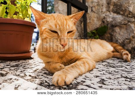Red Cat Resting On The Street.street Cat Resting