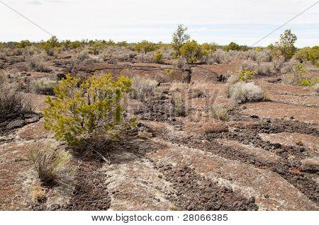 lava flow rock and desert vegitation