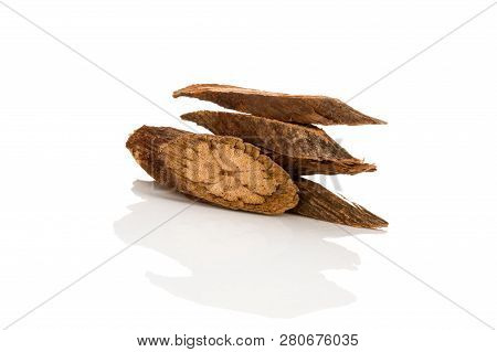 Ye Jiao Teng Chinese Medical Herb isolated on white background. Nourish heart and induce tranquilization. poster