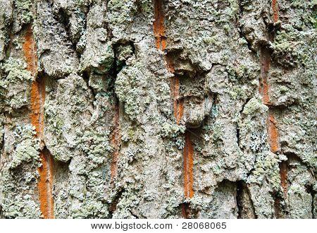 green and orange tree bark