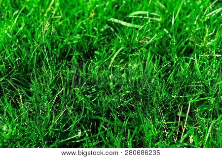 Very Green And Fresh Grass. Symbol Of Freshness And Natural. Brightness And Hue Colour. Close-up Vie