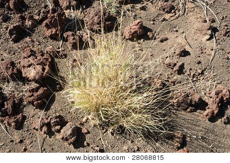 volcanic soil and desert plants