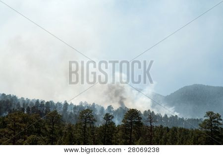 forest fire in the Coconino National Forest