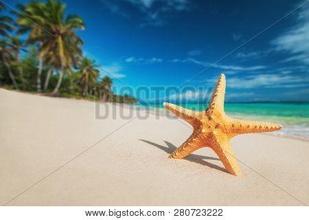 Seastar Or Sea Starfish Standing On The Beach. Punta Cana. Dominican Republic.