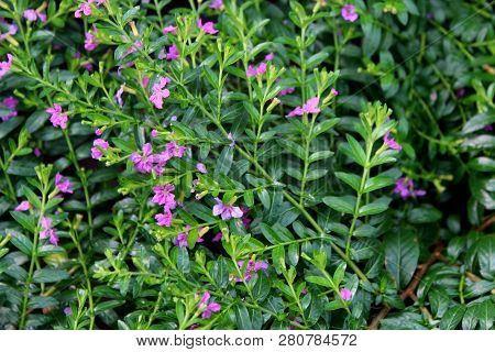 Gorgeous Background Image Of Lush Green Leaves On Flowering Plants With Dainty Purple Flowers In Bac