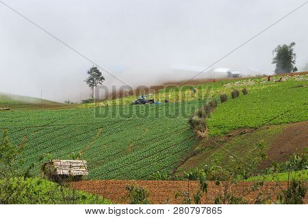 Phu Tab Berk Hill Landscape And Cabbage Field In Phetchabun Province Thailand, Village On Hill, Unse