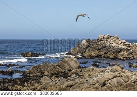 On A Sunny Clear Day, A Seagull Bird Soars Over Waves Breaking Gently Along The Rocks Of The Coastli