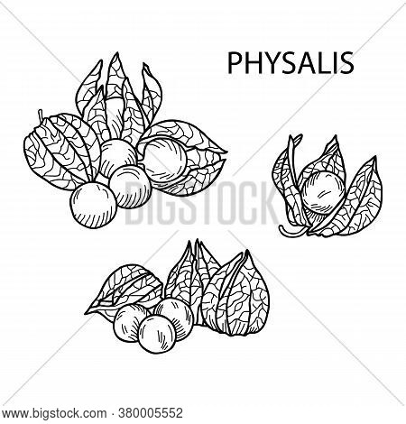 Physalis Fruit Composition On A White Background. Hand-drawn Vector Illustration.