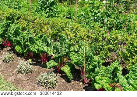 A Row Of Vegetable Garden Under The Sun