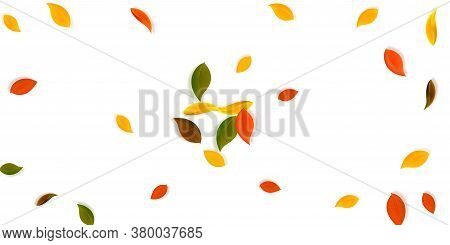 Falling Autumn Leaves. Red, Yellow, Green, Brown Neat Leaves Flying. Explosion Colorful Foliage On E