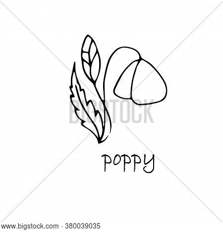 Poppy Plant Sketch. Hand Drawn Ink Art Design Object Isolated Stock Vector Illustration For Web, For