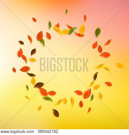 Falling Autumn Leaves. Red, Yellow, Green, Brown Chaotic Leaves Flying. Vignette Colorful Foliage On