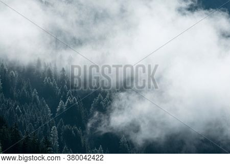 Fog in the pine forest in  morning, Dark tone image. Foggy mountain landscape with fir forest, Austria