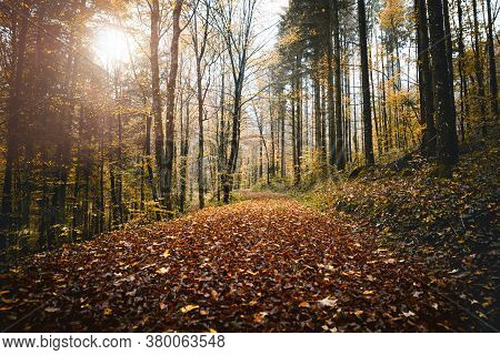 Forest Background In Autumn Or Fall Season With Brown Foliage And Sunshine, Broadleaf Woodland