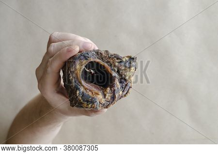 An Adult Caucasian Man's Hand Holds A Dried Beef Larynx