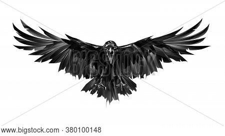 Painted On A White Background Bird Crow In Attack Front View