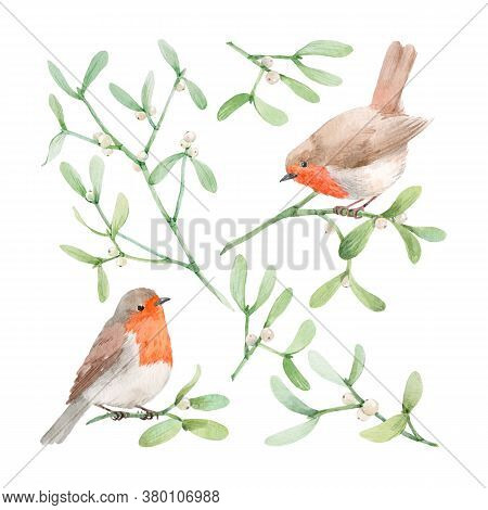 Beautiful Image With Watercolor Mistletoe Plant And Robin Bird. Stock Illustraqtion.