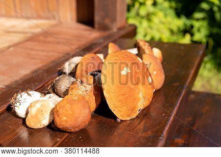 Forest Edible Mushrooms. Freshly Picked Boletus On Wooden Background. Ceps Boletus Edulis Over Woode