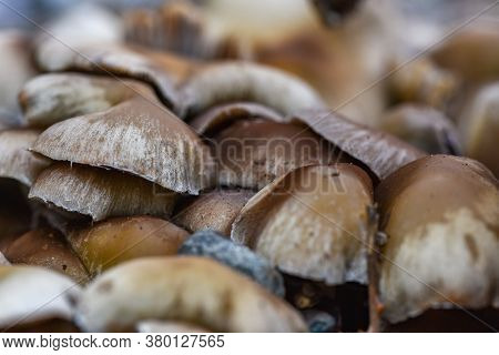 Wild Mushrooms Close Up In The Forest