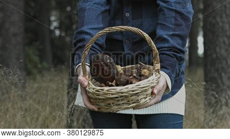 The view of basket of mashrooms. Woman hold basket and pick one and show it to camera.