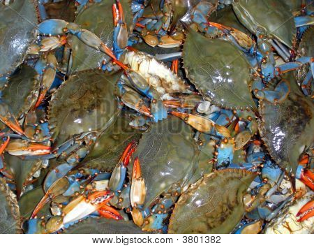 Blueclaw Crabs