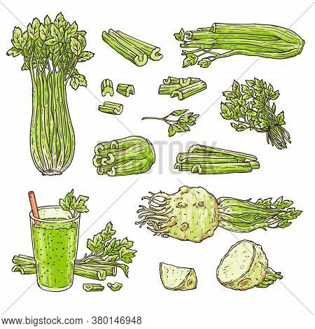 Celery Stalks, Leaves And Root Set With Smoothie Drink