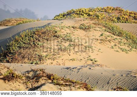 Coastal Shrubs On Windswept Sand Dunes Taken At A Remote Beach In The Rural Central California Coast