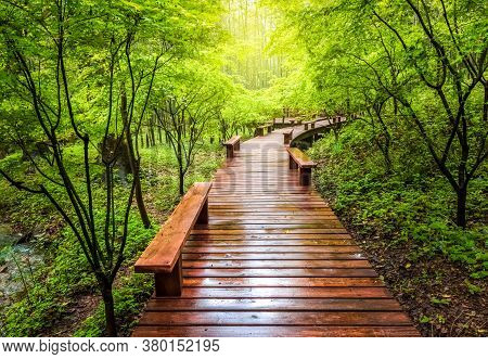 Wooden Walkway And Green Natural Scenery In The Summer, Boardwalk In The Park, Boardwalk In Forest