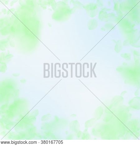 Green Flower Petals Falling Down. Pleasant Romantic Flowers Vignette. Flying Petal On Blue Sky Squar