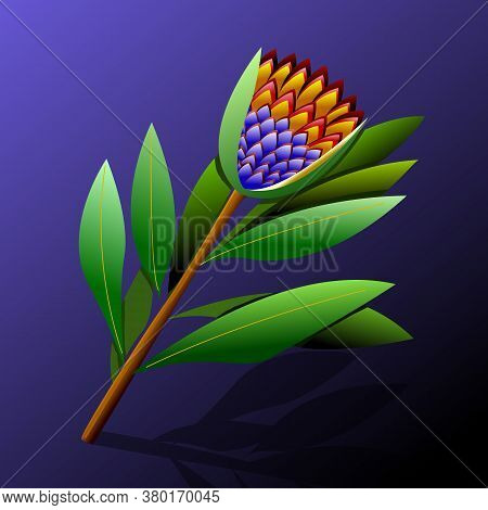 Protea In Realistic Style On Purple Background. Vintage Floral Background. Vintage Botanical Illustr