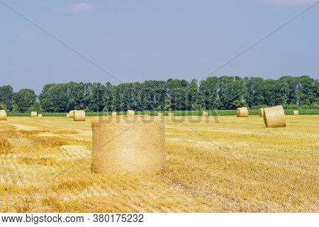 Large Round Straw Bale Of A Barley Lying On The Its Side On Harvested Agricultural Field Against The