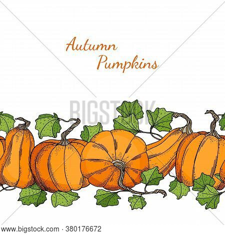 Vector Pumpkins Seamless Border. Autumn Background Template With Gourds And Leaves Isolated On White