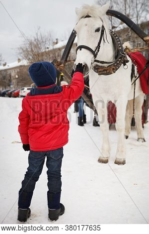 Cute Kid Boy In A Red Jacket Stroking A White Horse Harnessed To A Sled. The Child Thanks The Horse