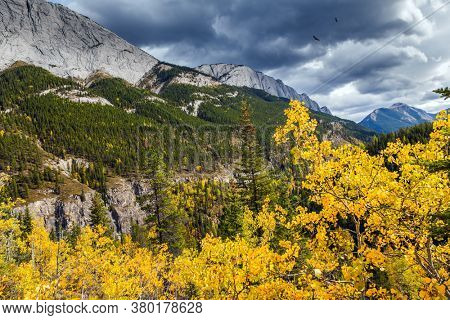 The magic colors of northern autumn. Orange, yellow and red leaves of aspens and birches. Concept of active, car and photo tourism. Road to Miette Hot Springs - the Hottest Springs in the Rockies
