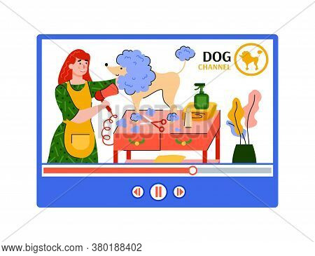Pet Grooming Or Dog Wash Video Channel - Online Tutorial Of Animal Groomer Washing And Drying A Pood
