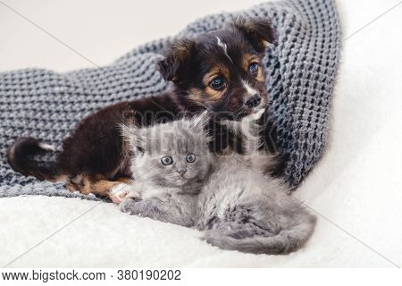 Kitten And Puppy. Group Of Two Small Animals Lie Together On Bed. Sad Gray Kitten And Black Puppy On