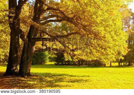 Autumn trees with golden autumn foliage in sunny autumn September park lit by sunshine. Colorful autumn landscape. Autumn park nature, autumn trees in the autumn forest. Autumn nature background