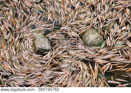 Bamboo Leaves Surrounding Rock On A Pond In China