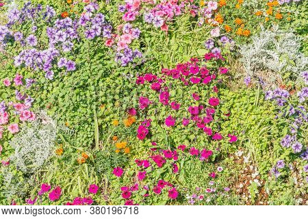 Colorful Flowers On The Flowerbed At Summer Time.