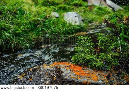 Beautiful Mountain Creek With Rich Flora In Forest. Conifers And Stone With Lichens In Water Stream