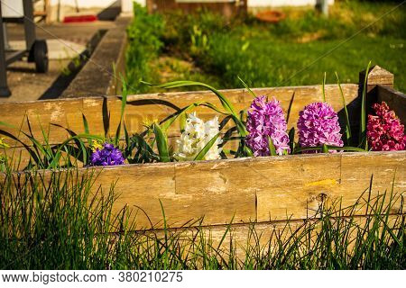 View Of Flowerbed In Backyard With Flowers Blooming In A Sunny Spring Day.