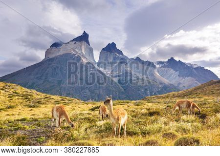 Beautiful mountain landscapes and guanaco in Torres Del Paine National Park, Chile. World famous hiking region.