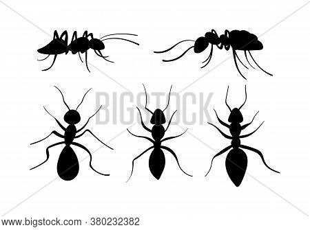 Hand Drawn Ants Collection. Black Insects Silhouettes. Vector Illustration.