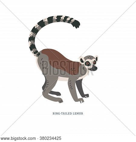 Ring-tailed Lemur Or Lemur Catta - Large Strepsirrhine Primate With Long Black And White Ringed Tail