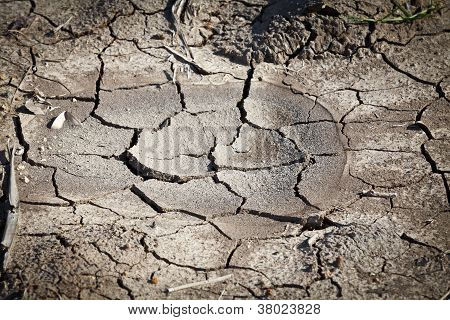 Dried Soil Cracking Under The Scorching Sun